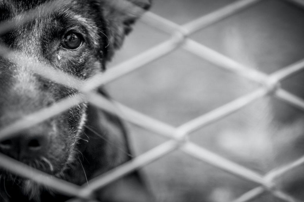 shelter dog rehabilitation