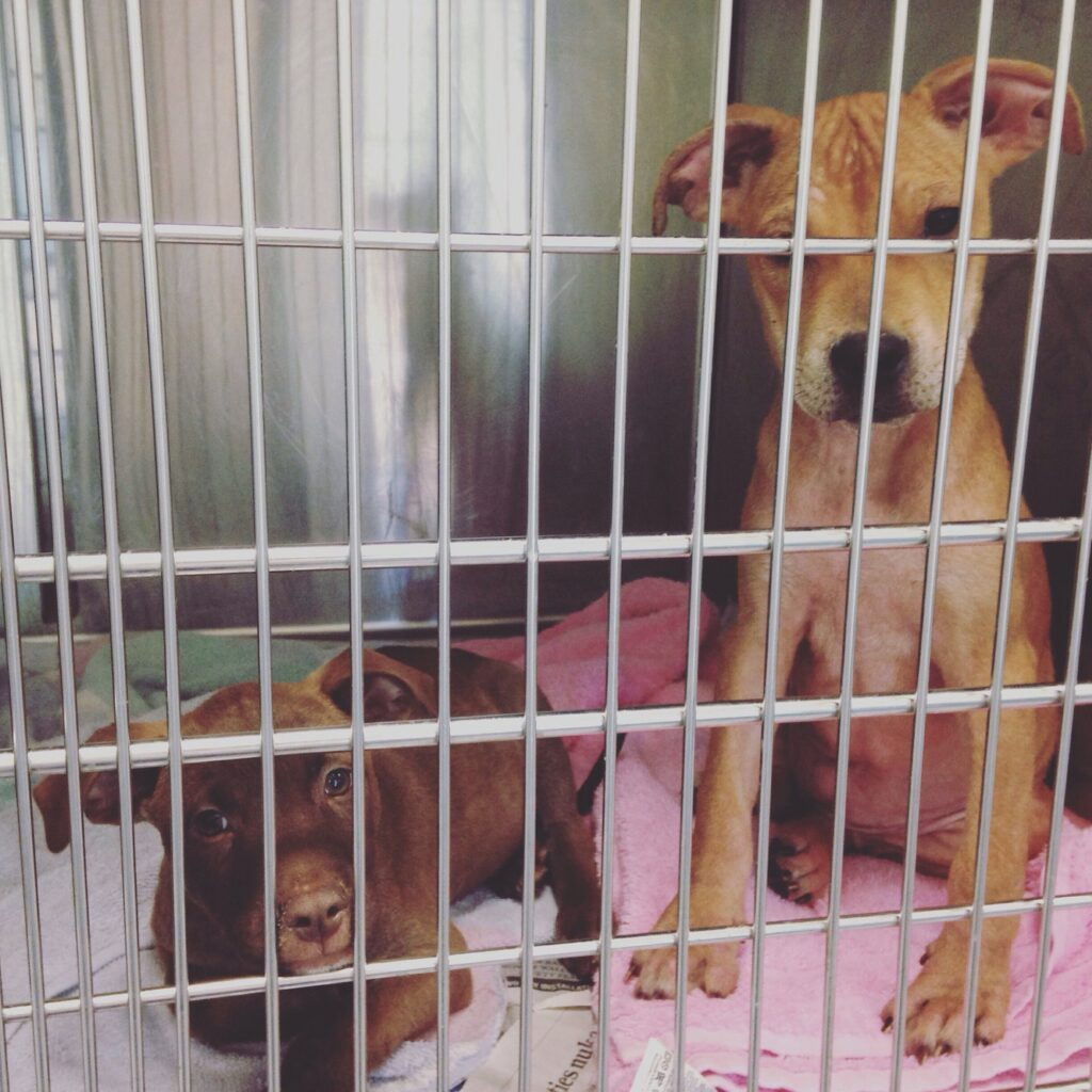 Cute puppies in a kennel at an animal shelter
